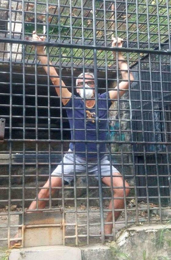 Pour Festival Chemin Faisant, photo durant le confinement lié au Covid19, de Philippe Canton Lamousse portant un masque de protection Covid19, depuis le zoo de Los Angeles, et qui mime un primate enfermé dans sa cage